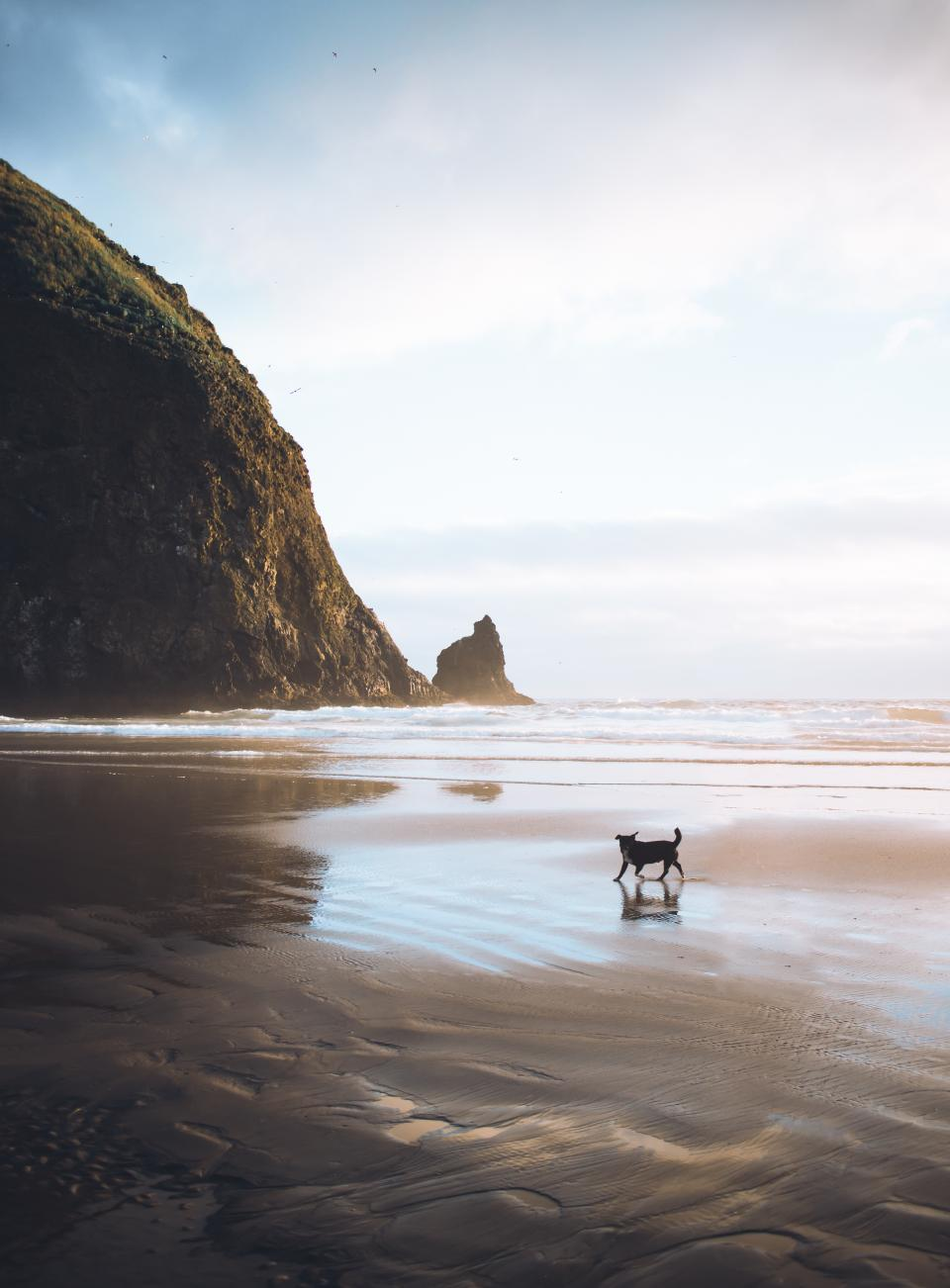 sea, ocean, water, waves, nature, beach, shore, coast, hill, mountain, sky, clouds, dog, pet, animal