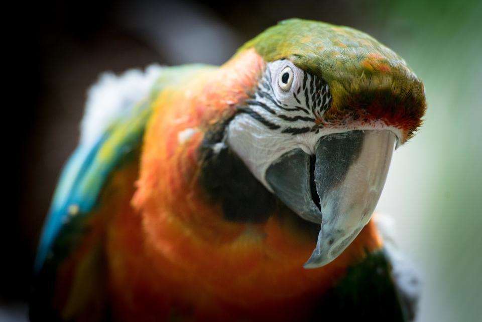 birds, fly, animals, beak, colorful
