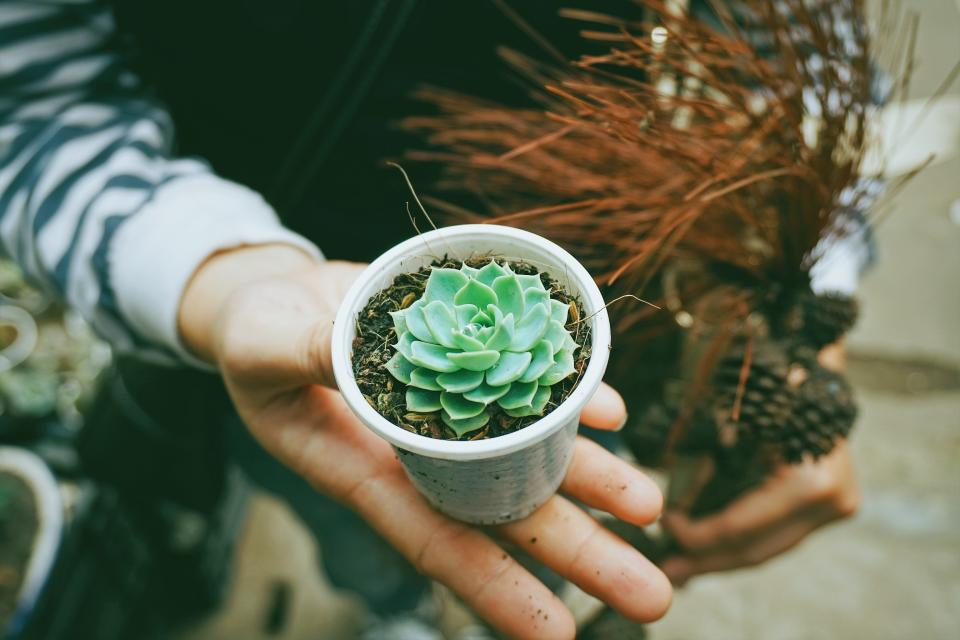 flower green petal bloom garden plant nature autumn fall hands crops