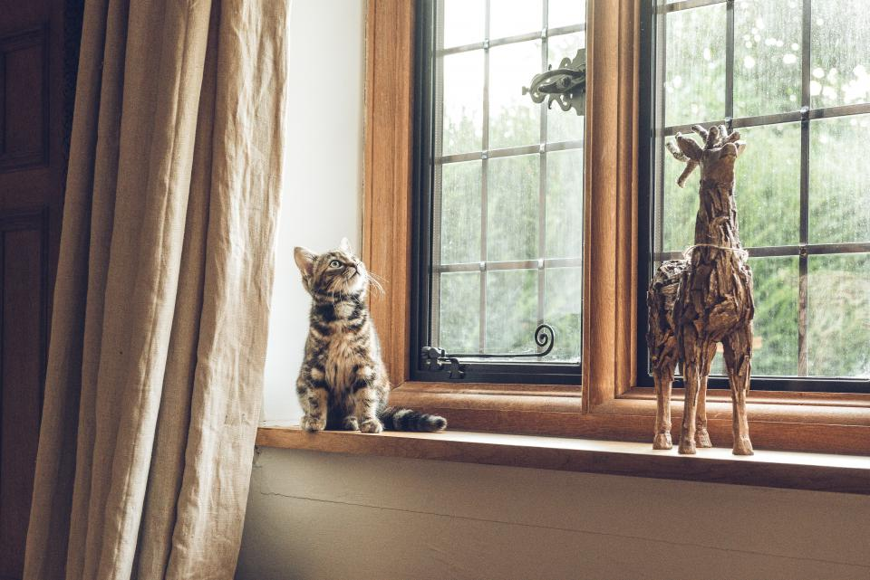 house, indoor, window, glass, frame, curtain, cat, pet, animal