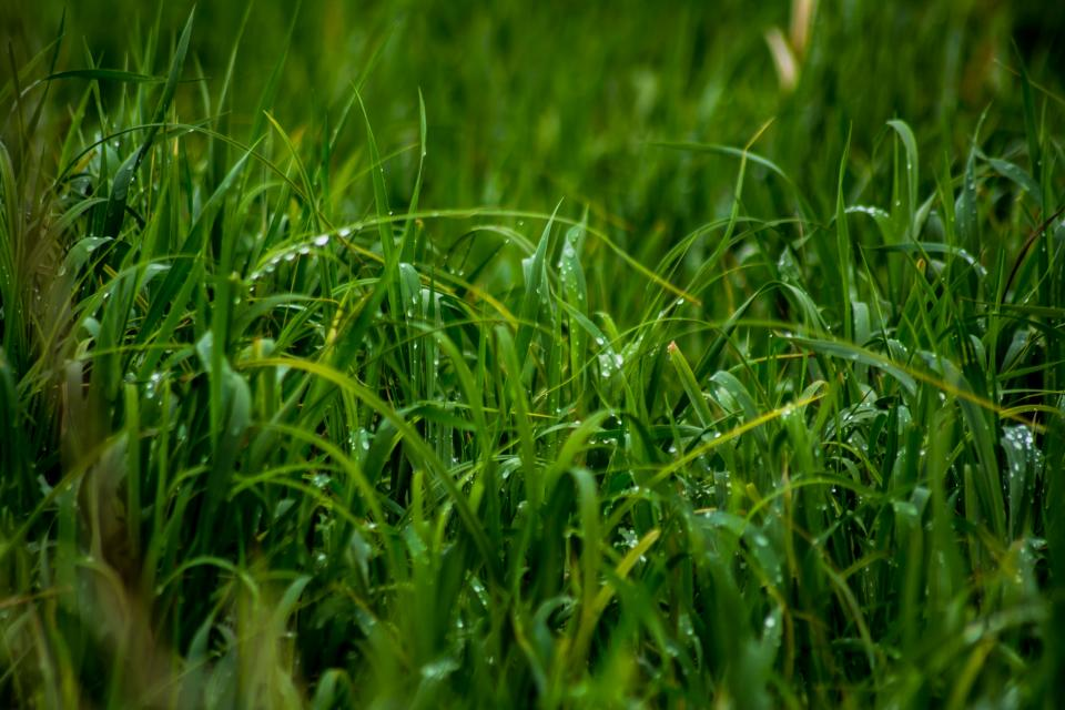 green, grass, dew, wet, raining, rain drops, moisture, nature