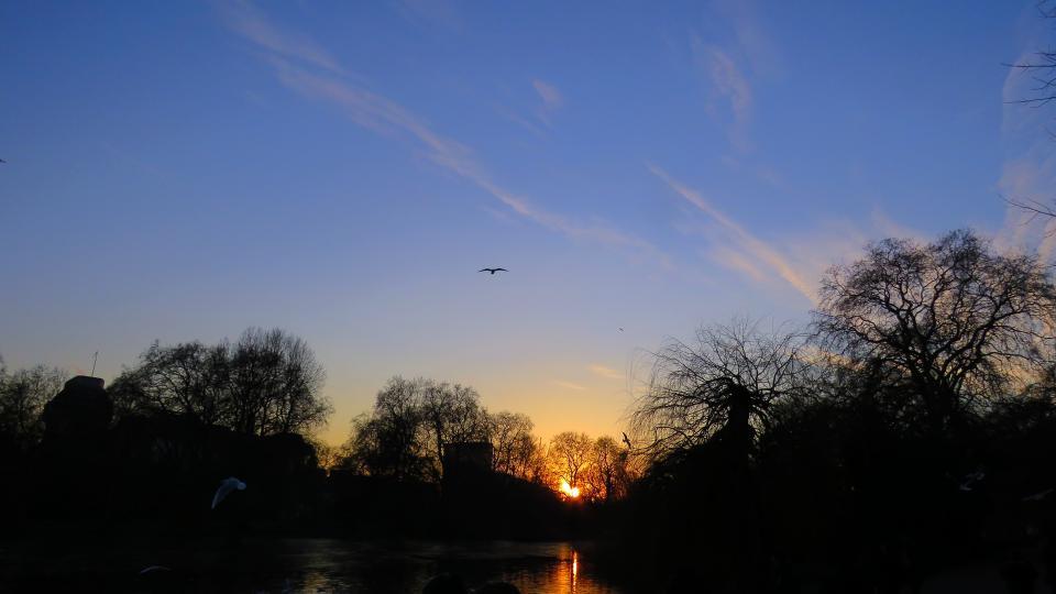 blue, sky, bird, flying, animal, tree, plant, dark, sunset, water, reflection, silhouette