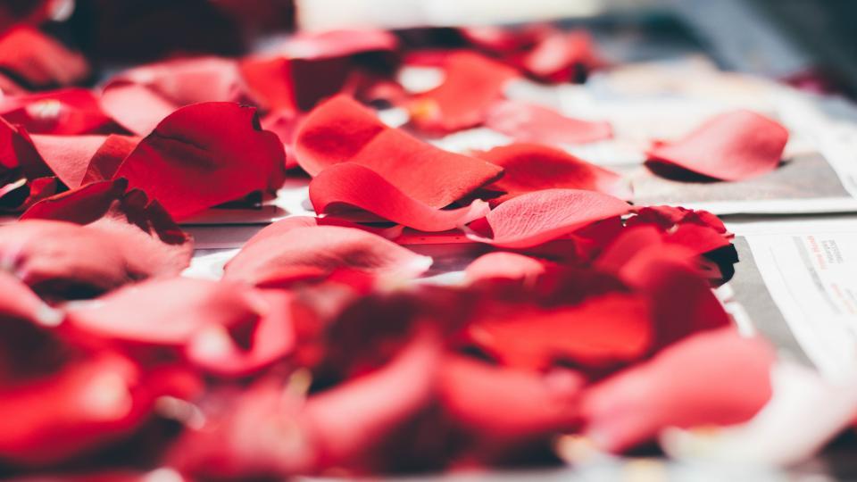 red petals rose flower