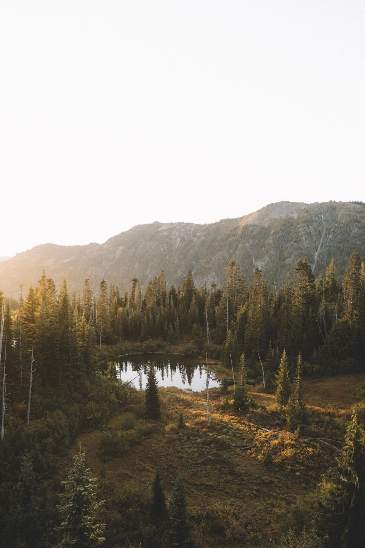 nature, trees, mountain, travel, adventure, green, trek, river, lake, swamp, autumn, fall, leaves, sun, sunset