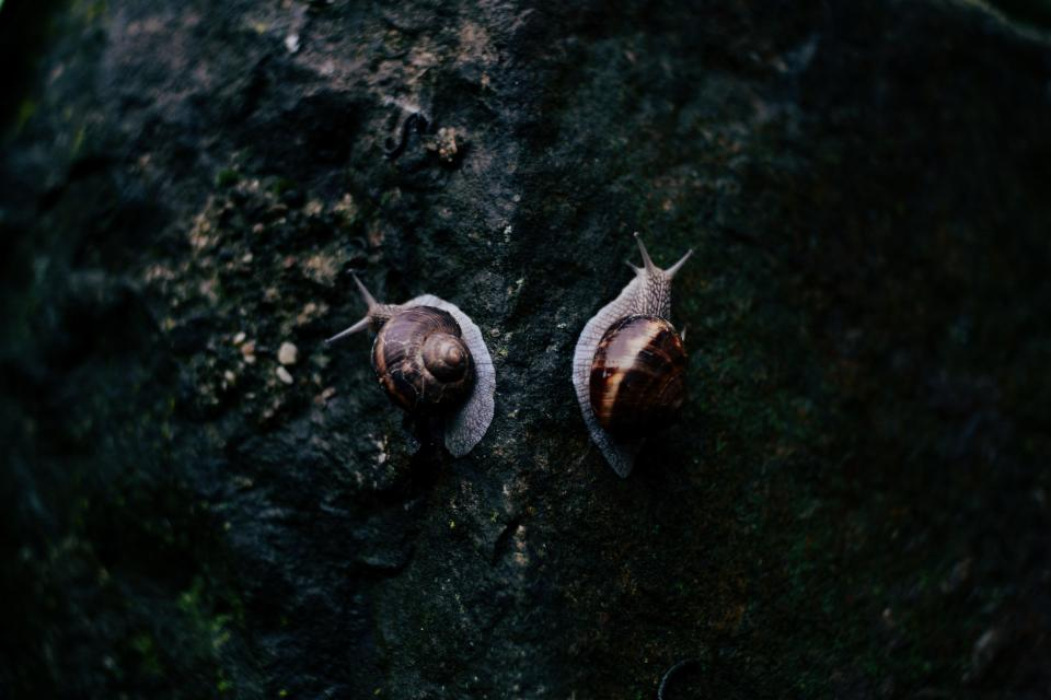 rocks, snail, reptile, animal, outdoor, dark