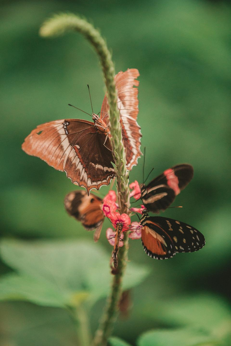 butterfly, moth, insect, macro, close up, nectar, pollen, flower, autumn, fall, red