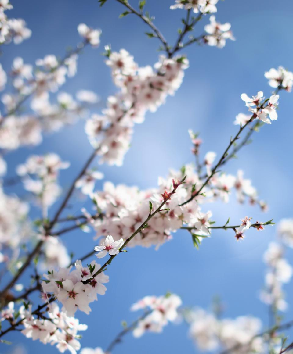 flower, nature, blossom, blur, bokeh, white, petals, sky, beautiful, aesthetic, branch