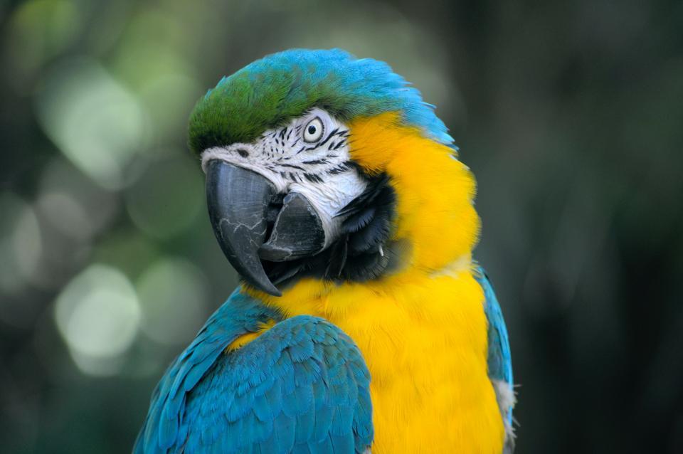 bird, beak, feather, animal, fly, colorful, blue, yellow, green
