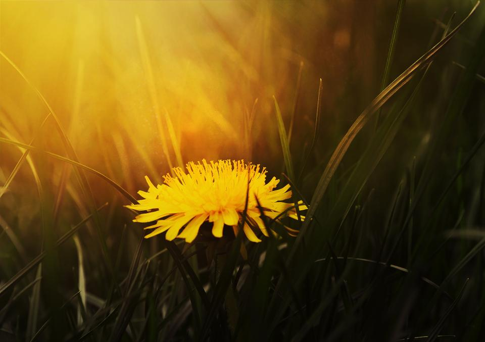yellow petal flower bloom nature plant sunset sunrise