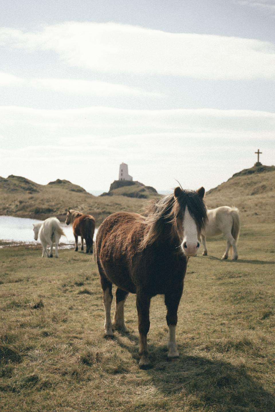 sea, water, coast, grass, highland, lighthouse, travel, donkey, horse, clouds, sky