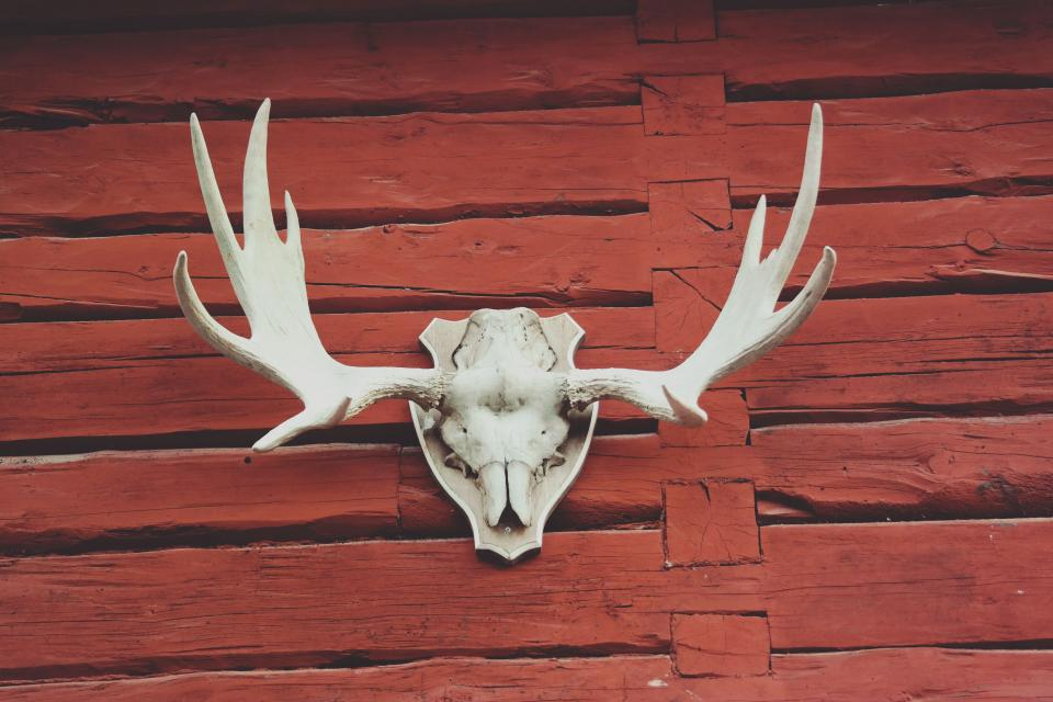 red wood antler skull
