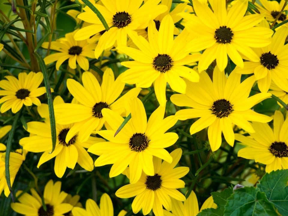 yellow petals flowers garden nature outdoors summer spring environment