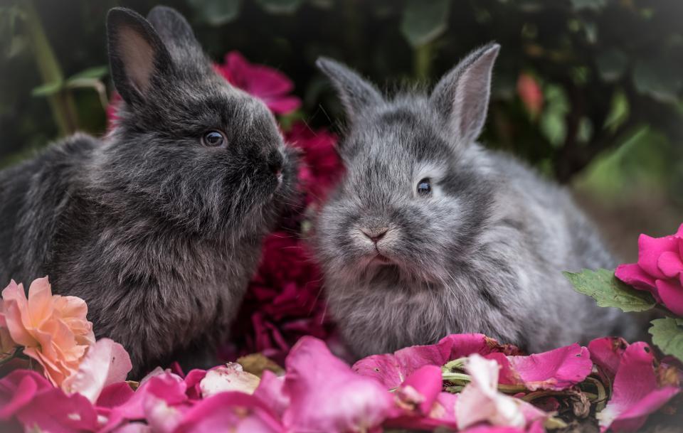rabbit, pet, animal, flowers, outside, trees, plants, nature
