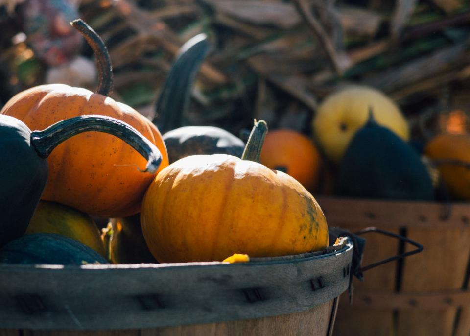 pumpkins basket halloween fall autumn nature outdoors