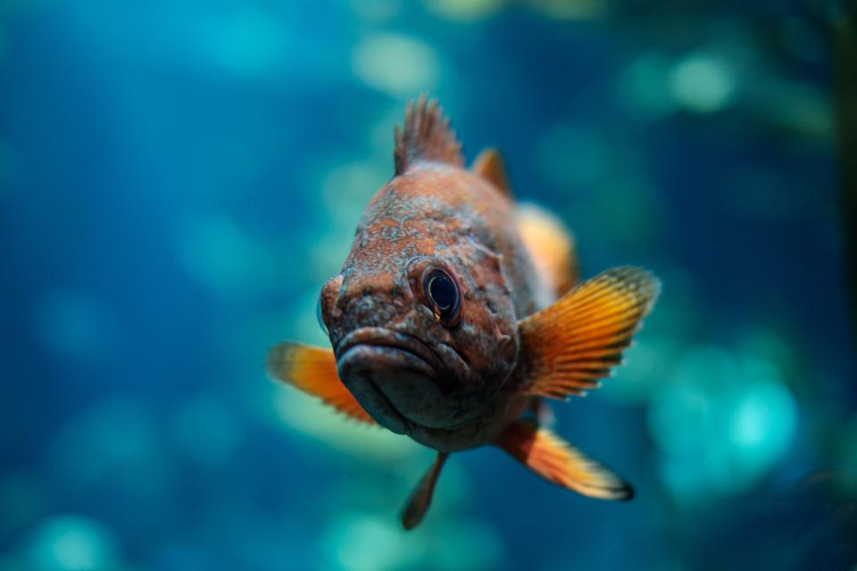 fish, aquatic, animal, ocean, underwater, blue, water