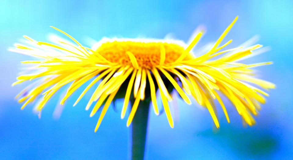 flower, yellow, petal, bloom, garden, plant, nature, autumn, fall, sunflower