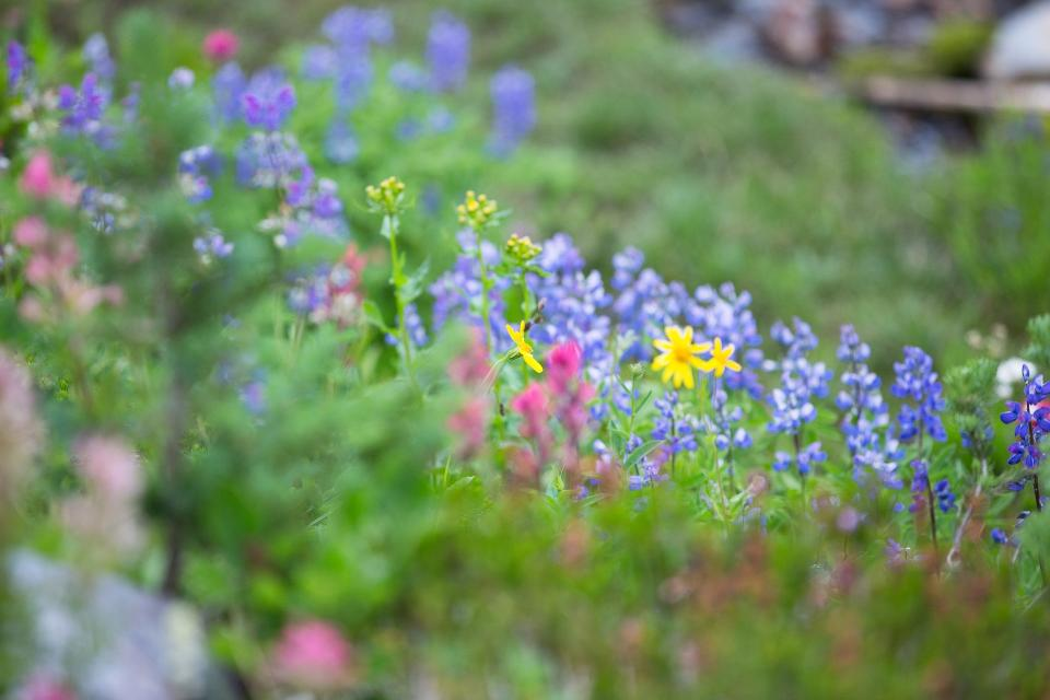 plant, garden, green, violet, pink