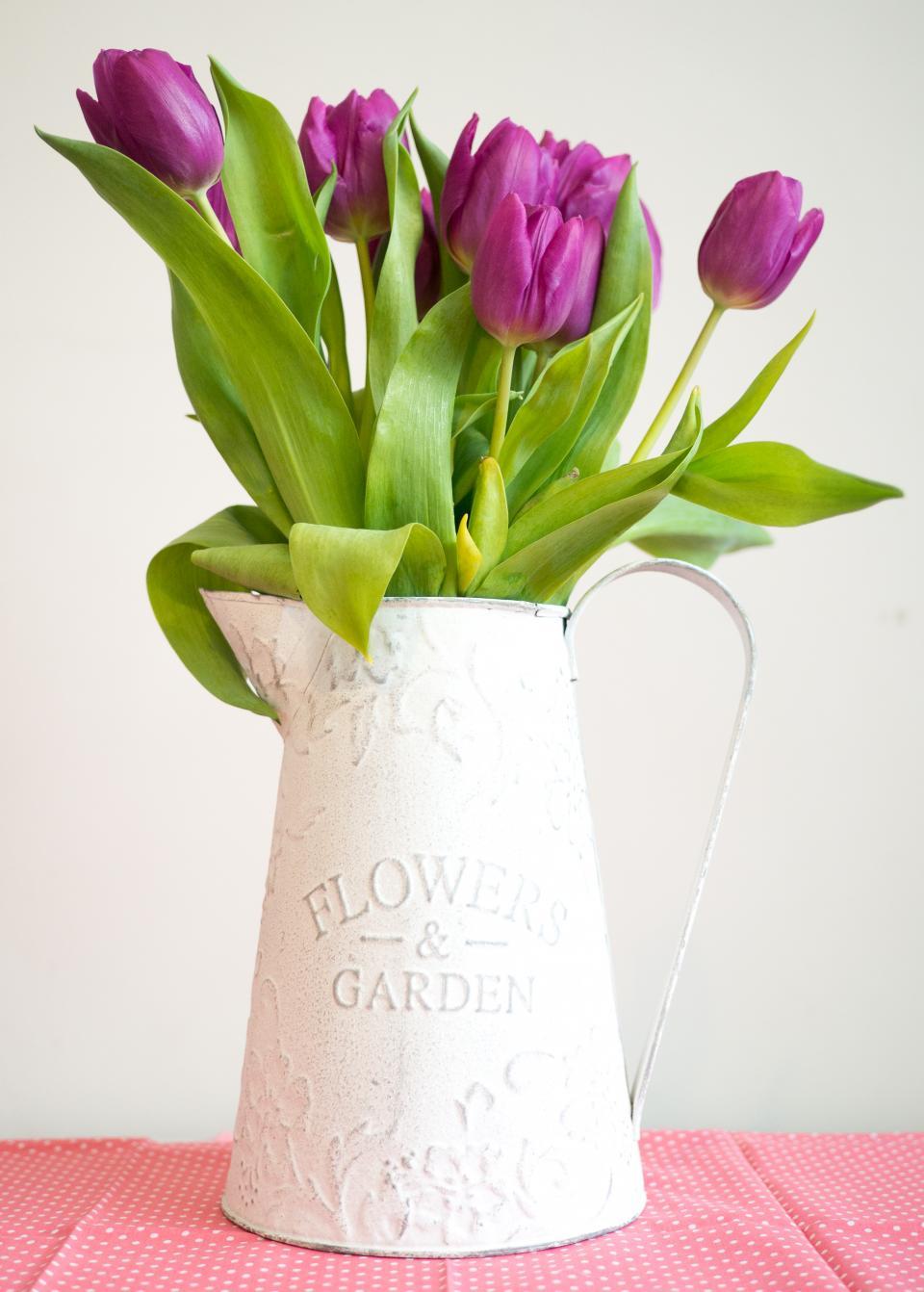 violet, tulip, pitcher, garden, interior, flower, pink, mat