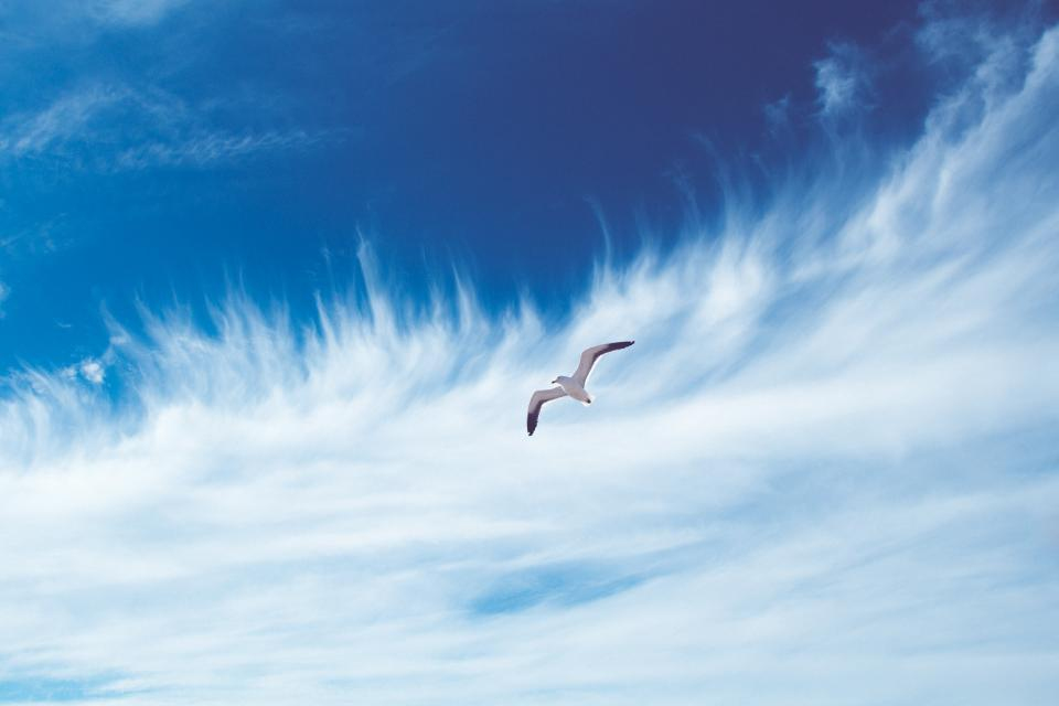 bird, seagull, sky, blue, clouds, flying