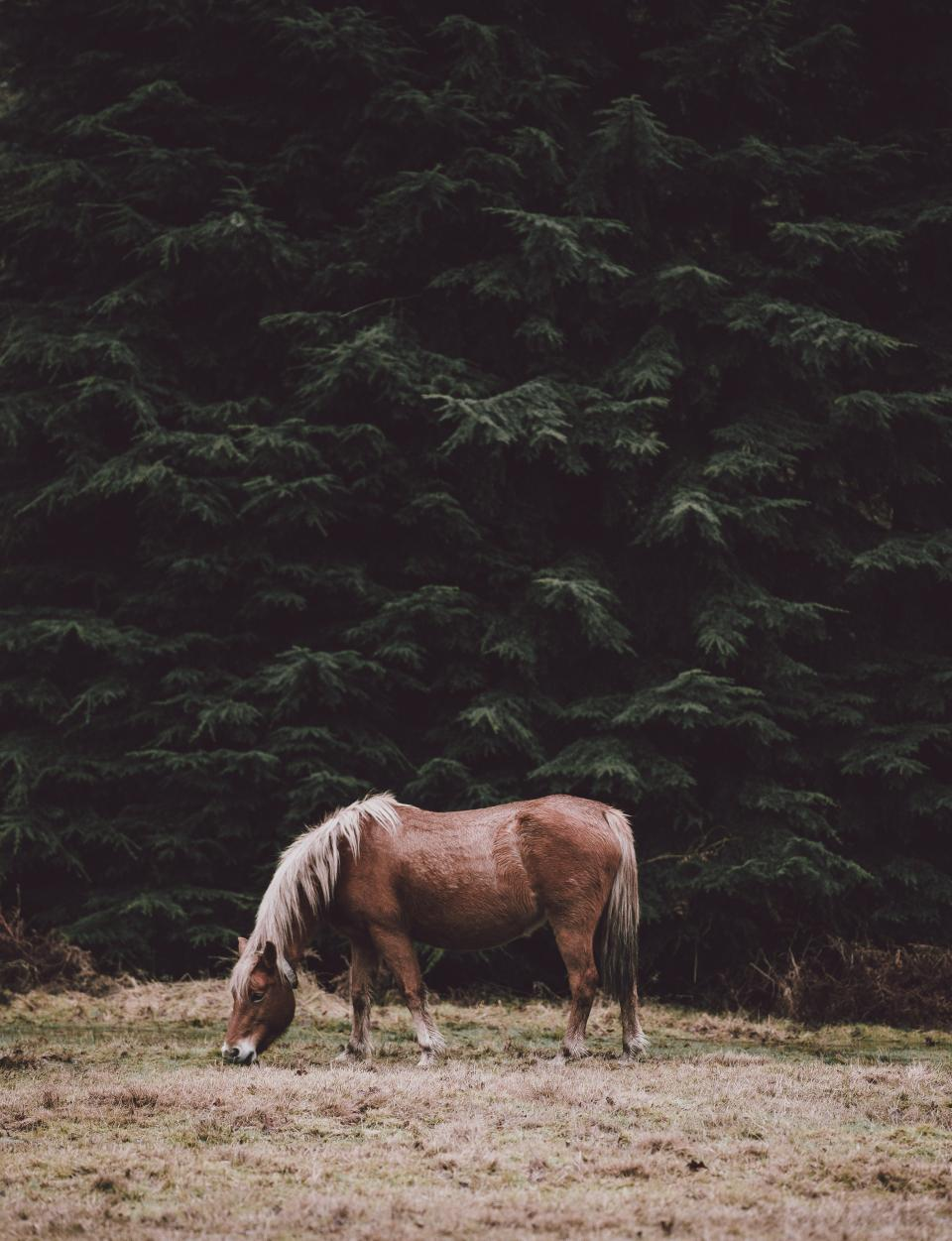 animal, horse, plants, grass, trees, pine, nature, field, farm, green