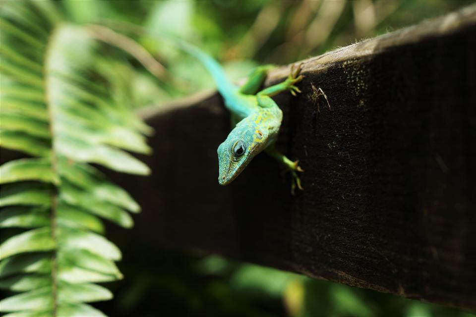 animals, reptiles, lizard, gecko, tree, bark, tree, wood, leaves, ferns, cute, adorable, green, still, bokeh
