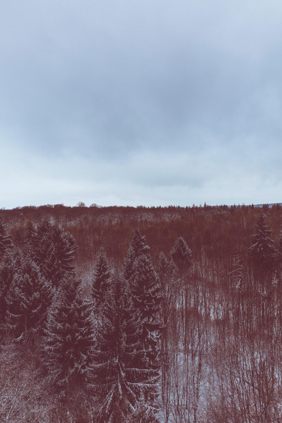 snow, winter, white, cold, weather, ice, trees, plants, nature, woods, forest, aerial, travel, adventure, clouds, sky
