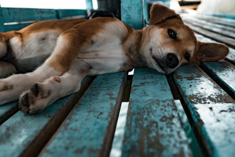 wood, dog, puppy, pet, animal
