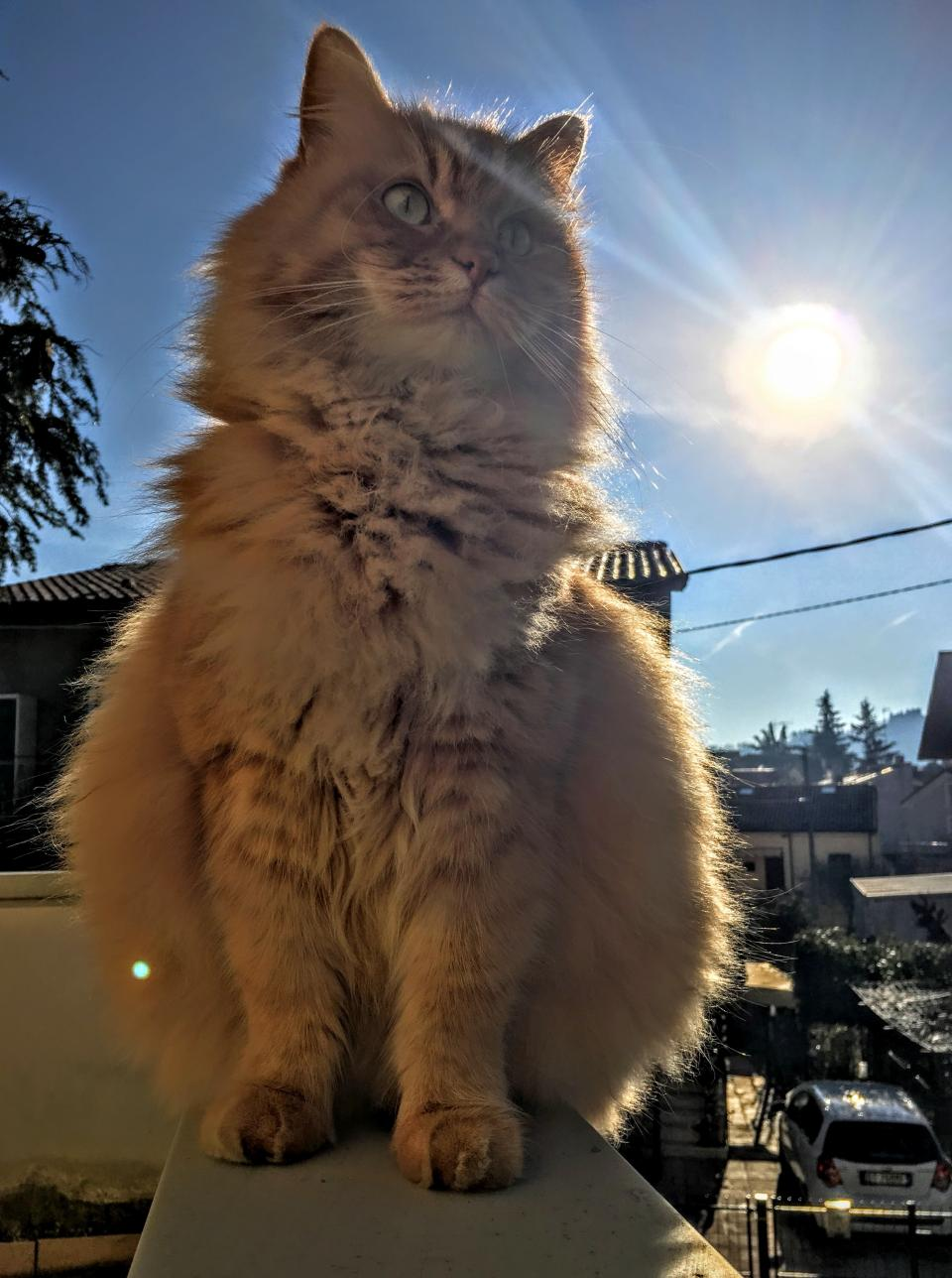 cat, animal, pet, outside, sunlight, sunshine, sunrise, sunny, day, blue, sky, cloud, rooftop, houses, car, vehicle, parking