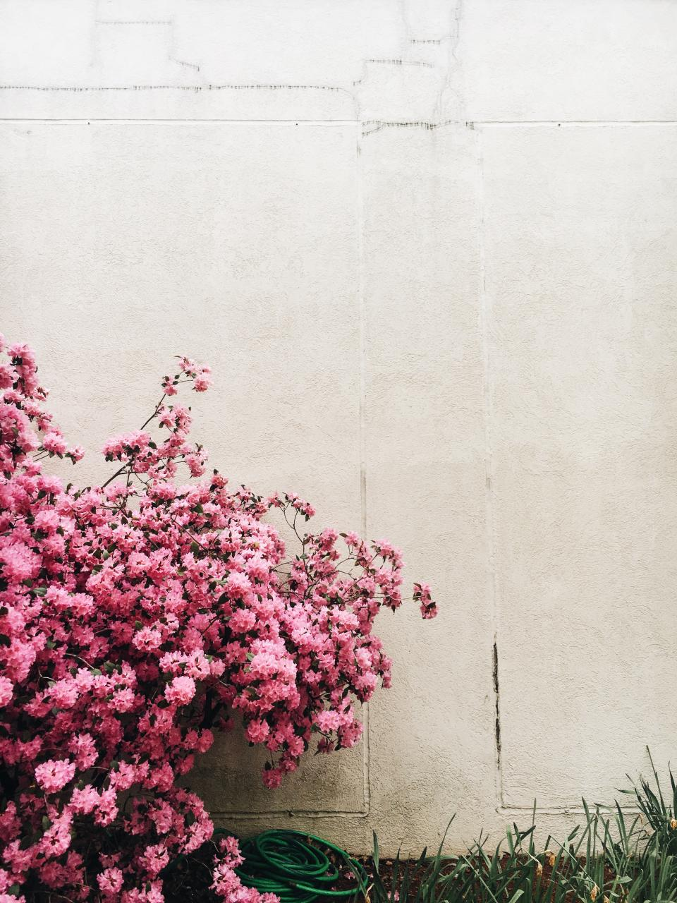 wall outdoor grass pink flowers nature plants