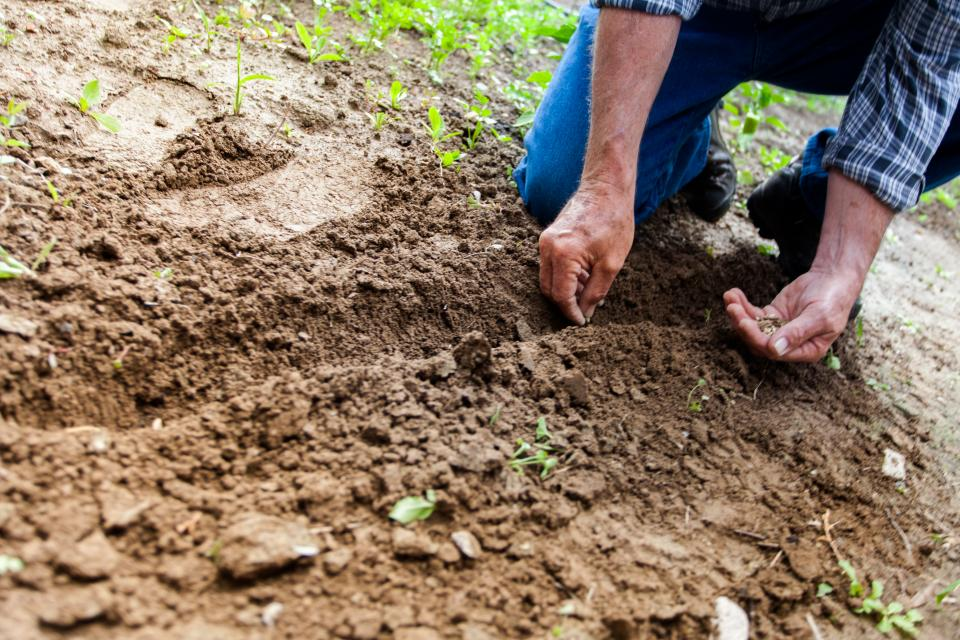 soil land environment nature seeds planting outdoor people man farmer