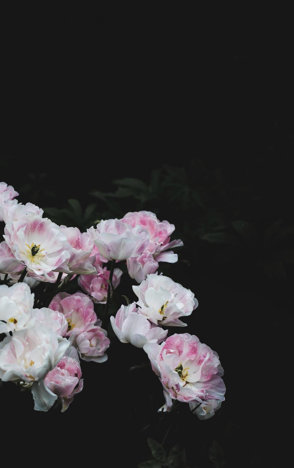 white, flower, bloom, blossoms, nature, plant