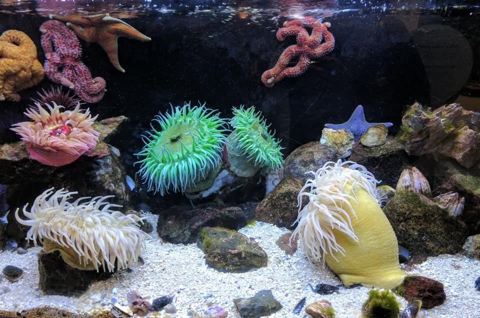 sand, rocks, coral, reefs, aquatic, animal, sea anemone, water, underwater