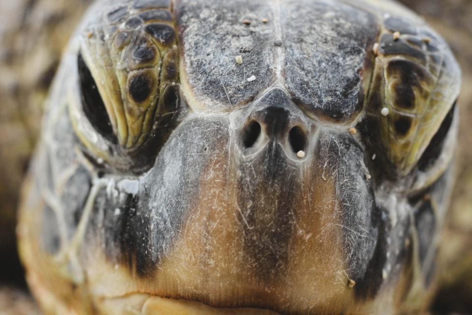 turtle, reptile, aquatic, animal