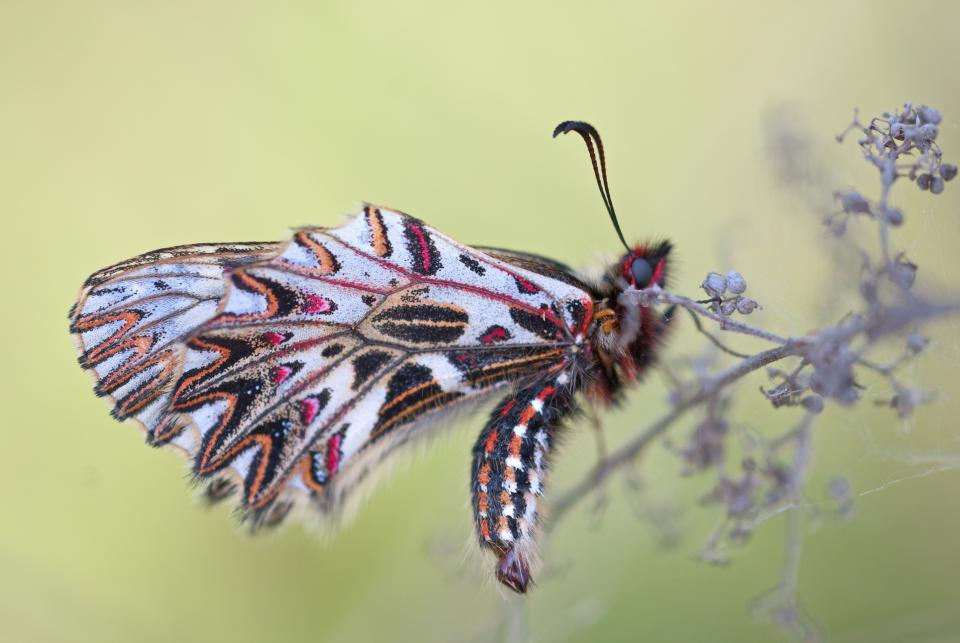 butterfly, flower, insect, nature, plant, blur