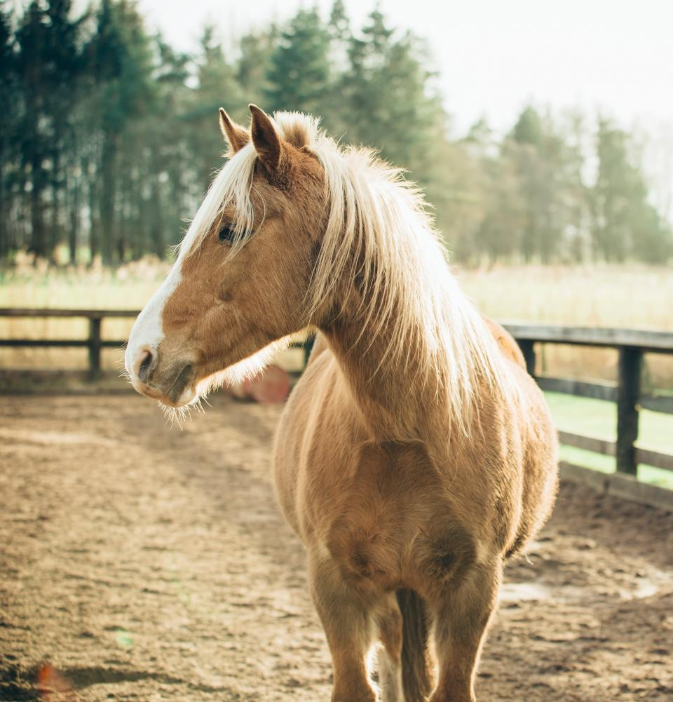 horse, animal, brown, fence, farm, trees, woods, forest, snout