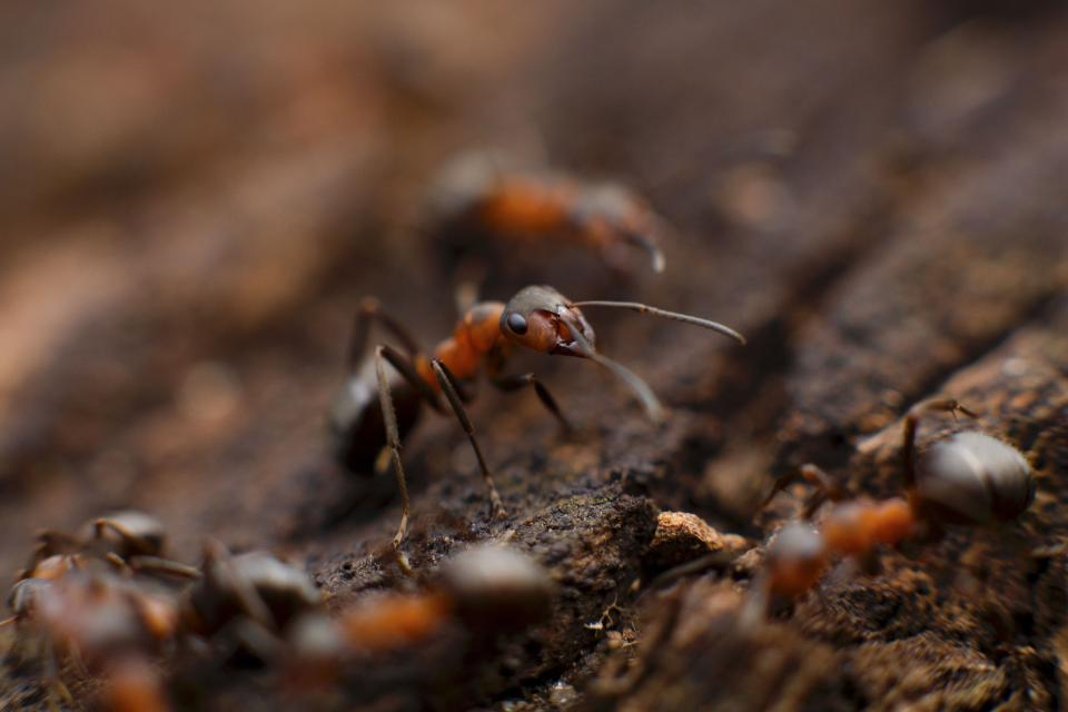 ant insect macro close up soil