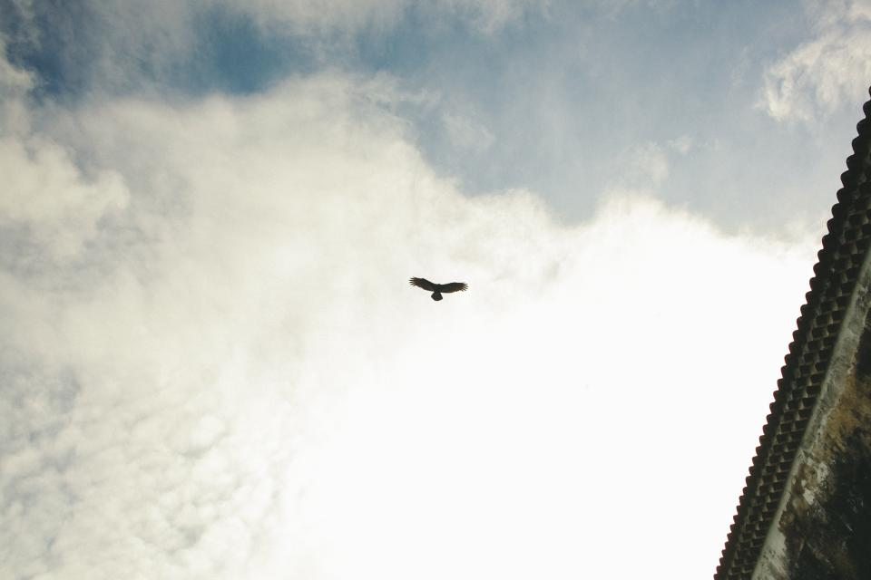 roof, clouds, sky, bird, animal, flying, nature, outside