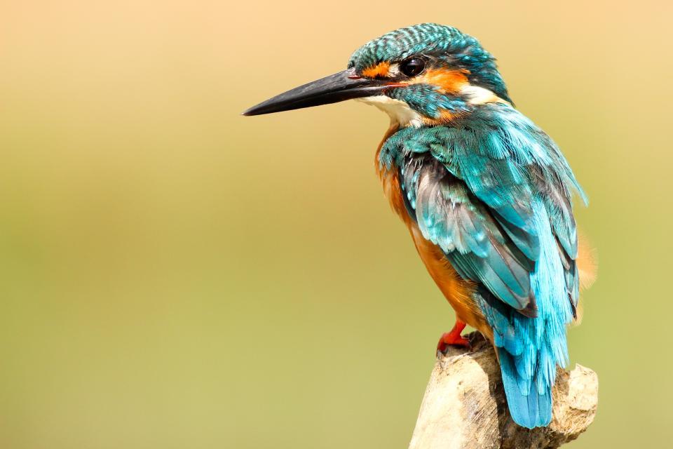 bird, beak, feather, animal, fly, colorful, blue, wood, sharp