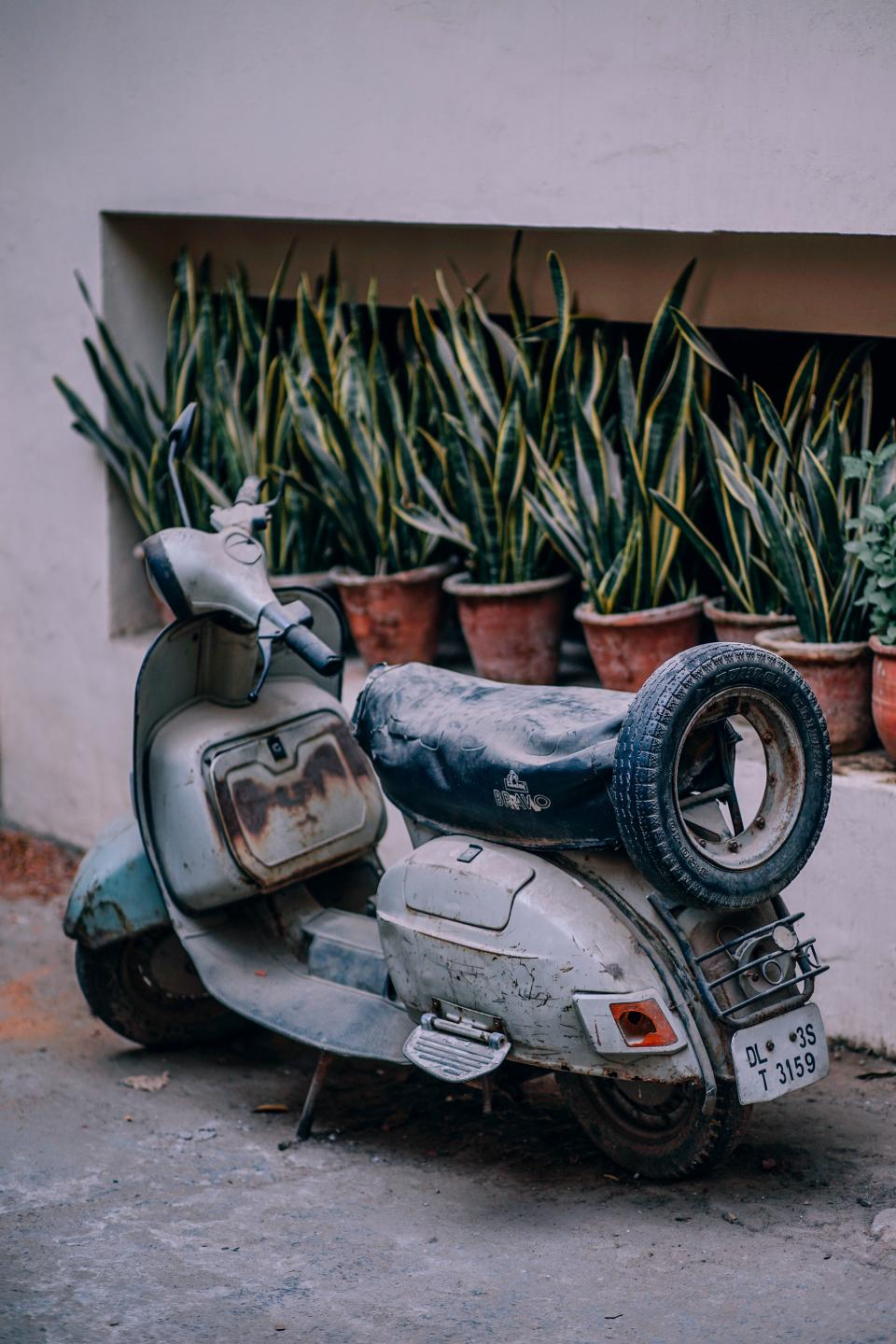 old, scooter, motorcycle, transportation, travel, parking, green, plant, nature, flower, pot, outside