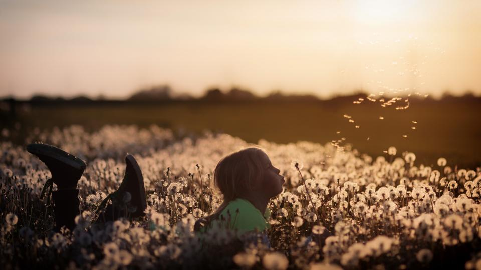 flowers, garden, farm, field, people, baby, girl, kid, child, play, outdoor