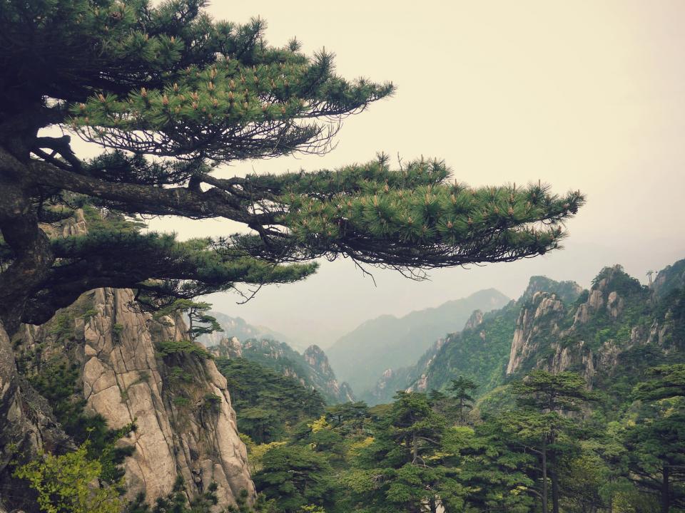 mountain landscape china pine view