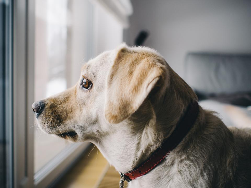 dog, pet, looking, animals, home