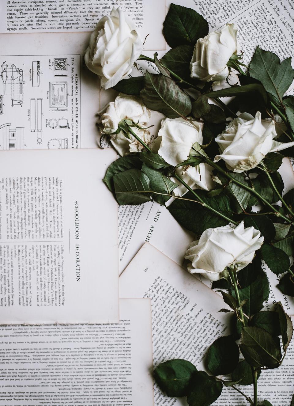 rose white flower letter leaf decoration book paper words drawing