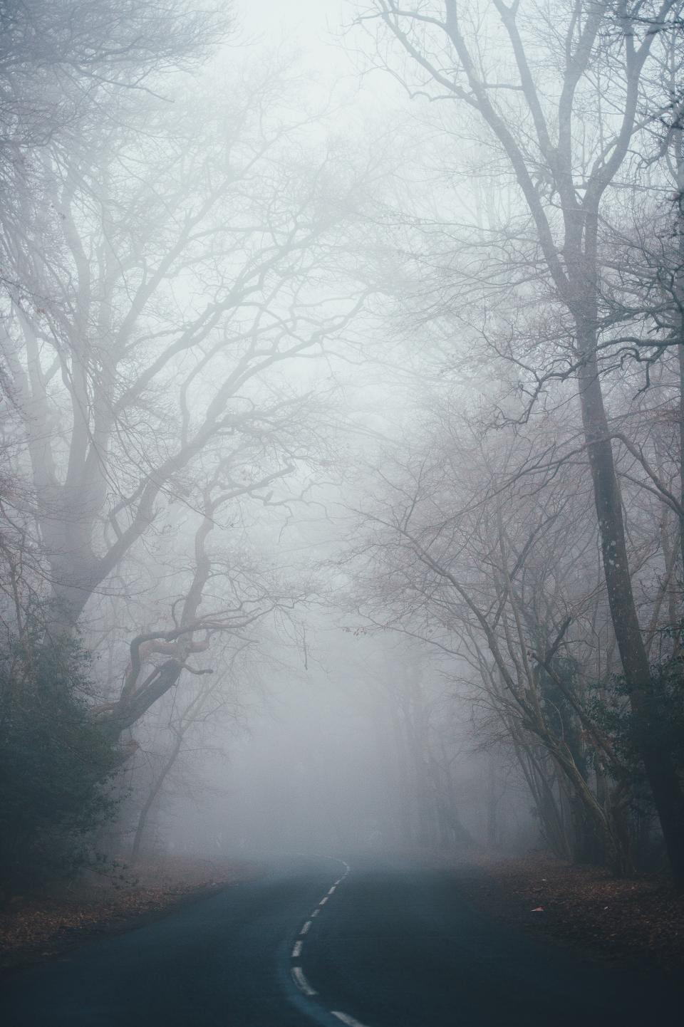 fog, nature, trees, road, trip, adventure, fall, grass, forest, travel, autumn, path, leaves, sky, branches, stem, plants