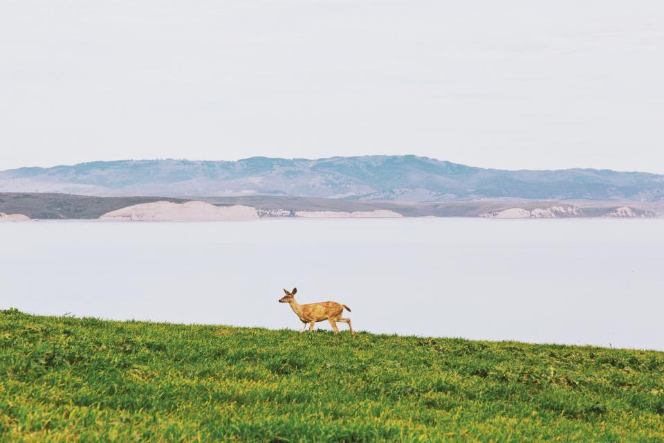 deer animals grass lake water landscape nature mountains water outdoors