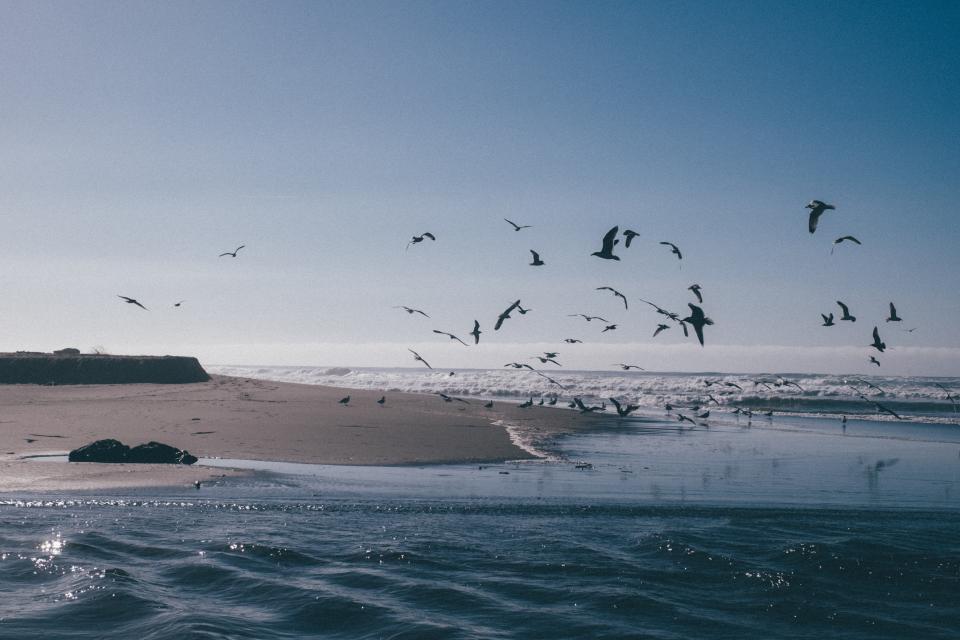 sea, ocean, water, waves, nature, beach, birds, animal, flying, outdoor, travel, shore, coast, blue, sky