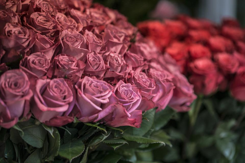 pink, red, roses, flowers, boquet