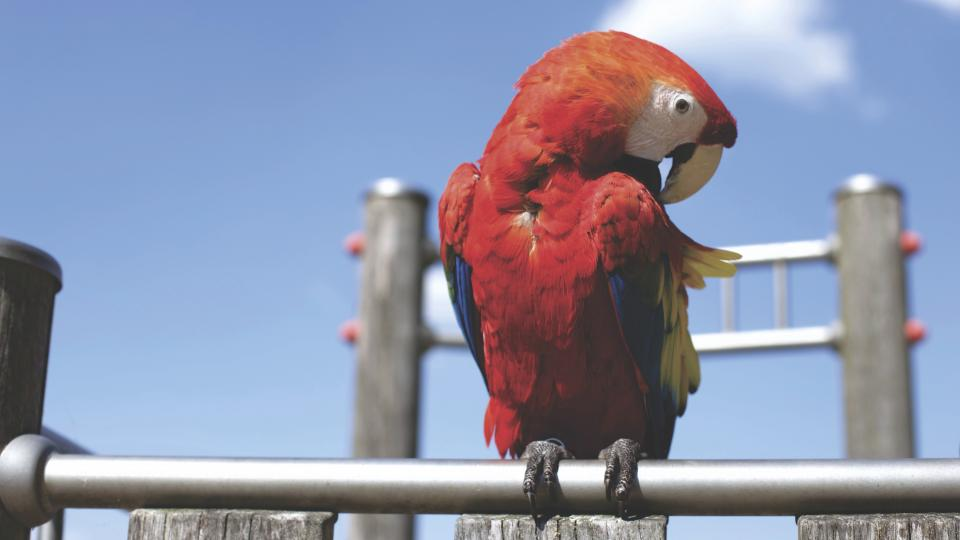 blue sky red parrot bird animal steel metal