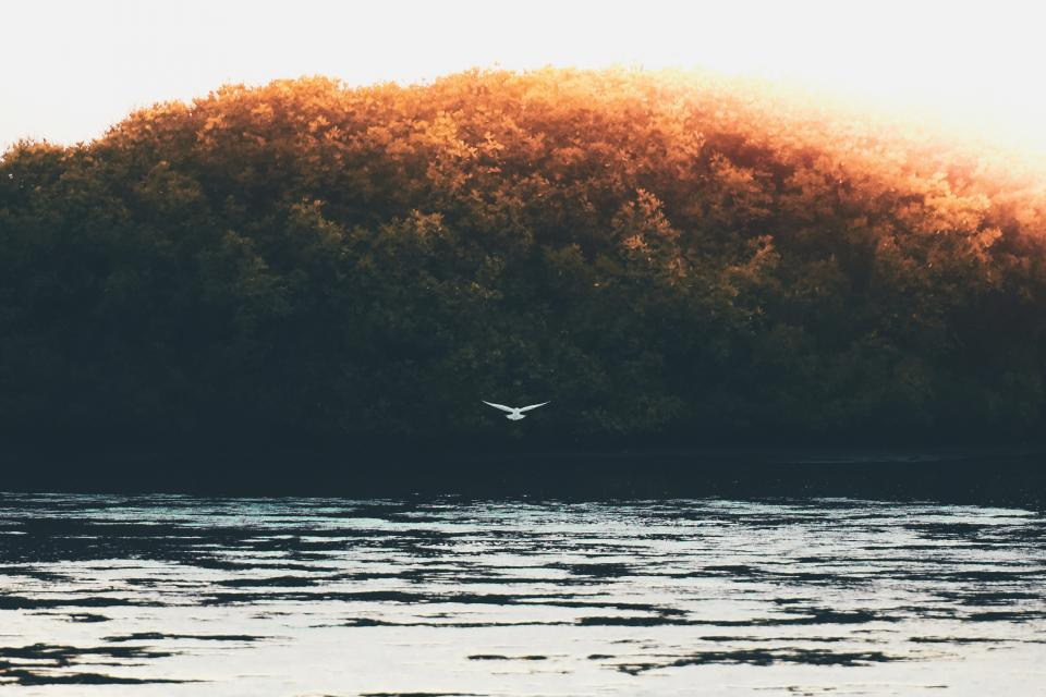 trees, bird, flying, nature, lake, water, sky, cloud, aesthetic, forest, leaves
