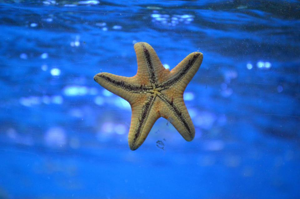 starfish, underwater, ocean, sea, yellow
